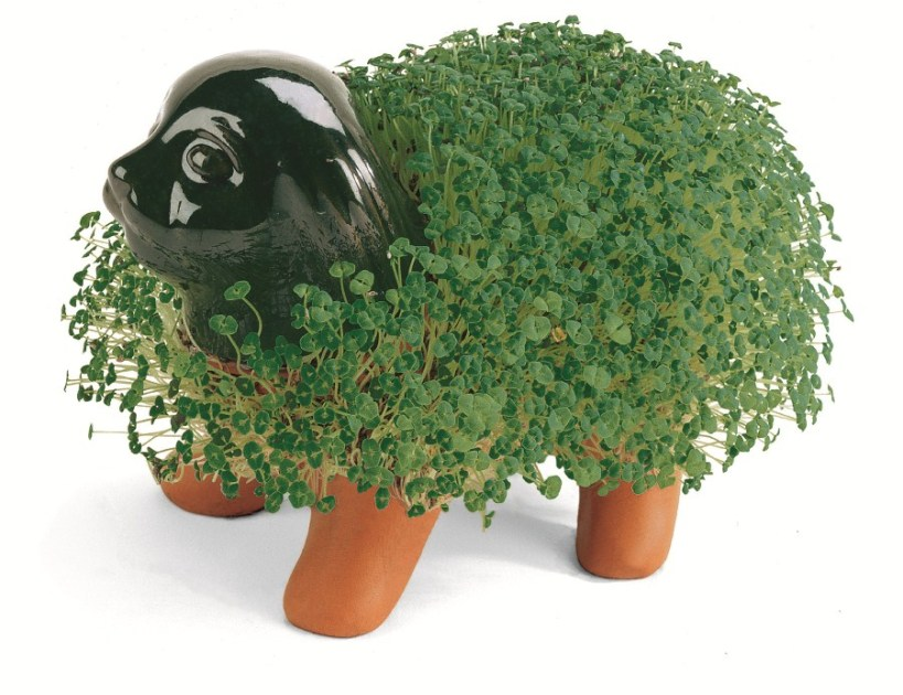 Who doesn't love a Chia pet?