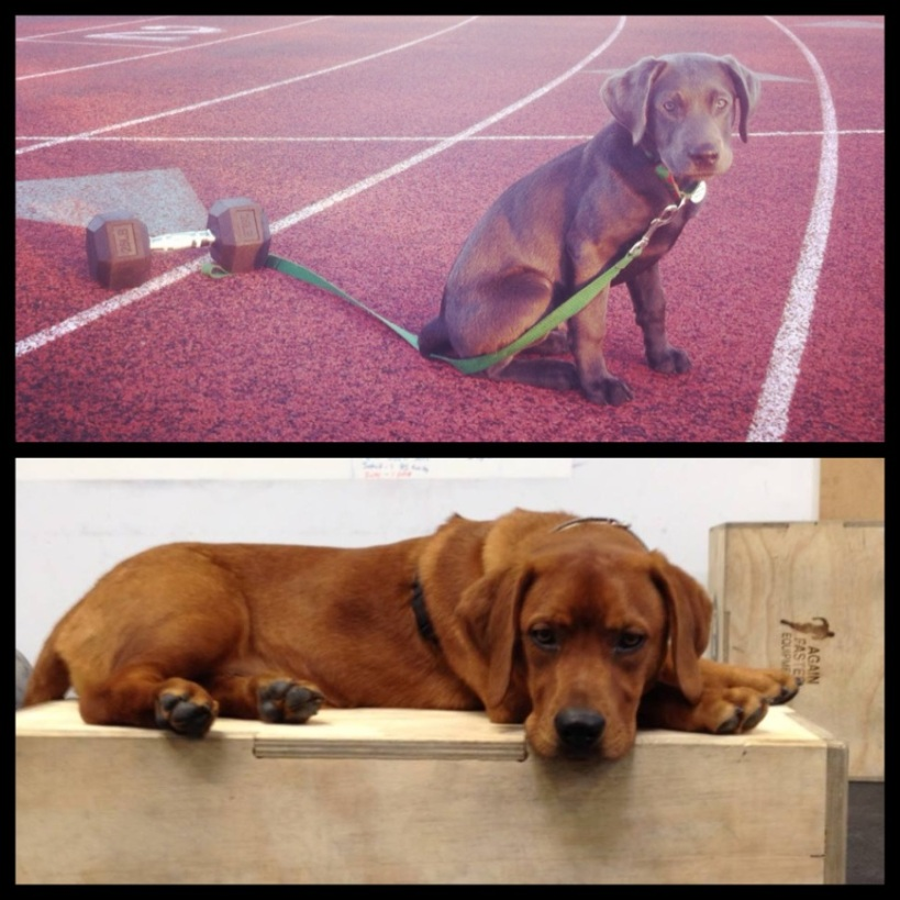 puppy park workout